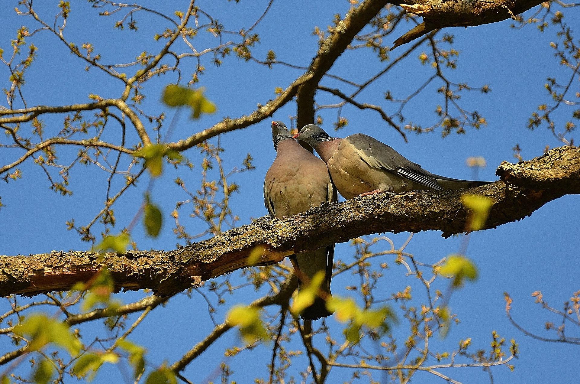 Marcel Cervantes de Oliveira, A História dos Dois Pássaros, O Desapego e a Voracidade